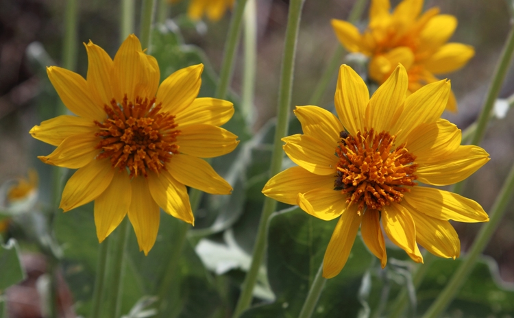 Blumen im Mesa Verde Nationalpark
