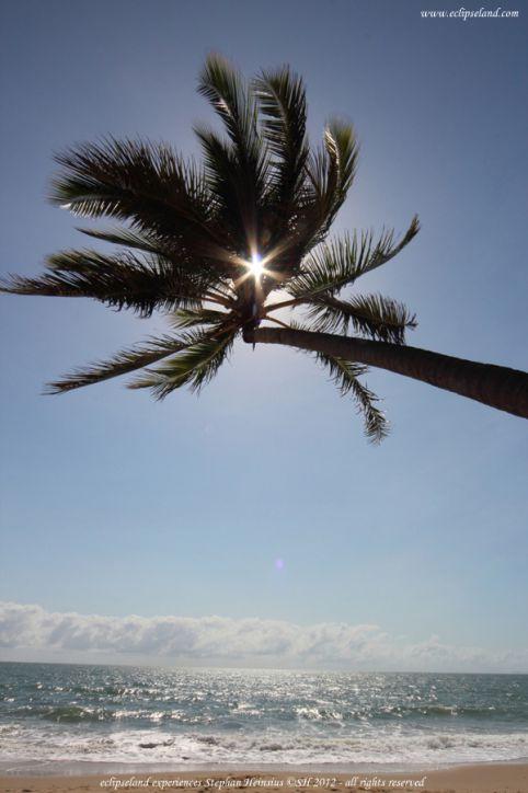 shwarze palme darmstadt